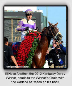 I'll Have Another, the 2012 Kentucky Derby Winner, heads to the Winner's Circle with the Garland of Roses on his back.